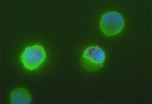 Human CD34 stem cells